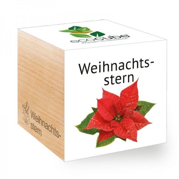 """Ecocube Pflanze im Holzwürfel """"Weihnachtsstern"""""""