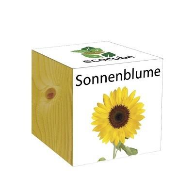"Ecocube Pflanze im Holzwürfel ""Sonnenblume"""