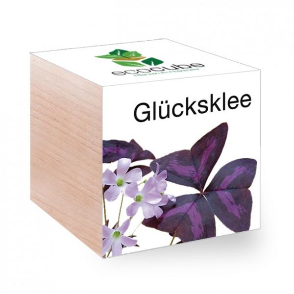 """Ecocube Pflanze im Holzwürfel """"Glücksklee"""""""