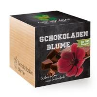 "Ecocube Pflanze im Holzwürfel ""Schokoladen-Blume"""