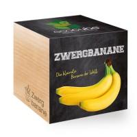 """Ecocube Pflanze im Holzwürfel """"Zwergbanane"""""""