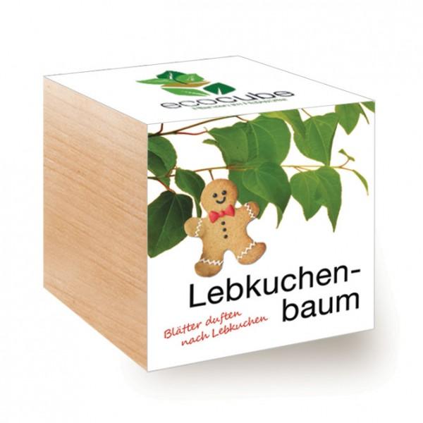 "Ecocube Pflanze im Holzwürfel ""Lebkuchenbaum"""