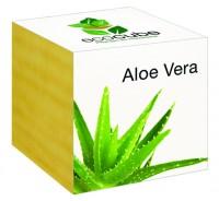 "Ecocube Pflanze im Holzwürfel ""Aloe Vera"""