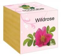 """Ecocube Pflanze im Holzwürfel """"Wildrose"""""""