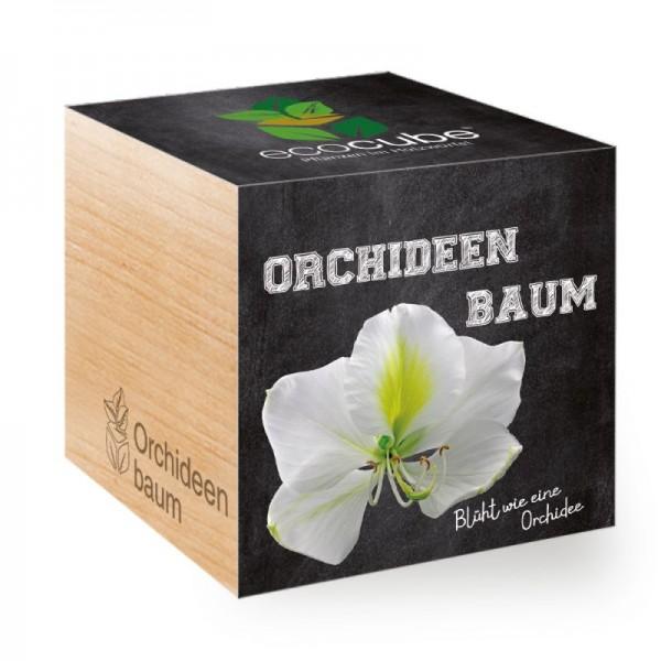 "Ecocube Pflanze im Holzwürfel ""Orchideenbaum"""