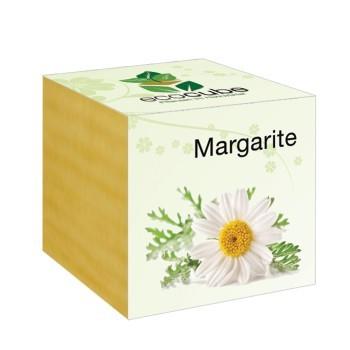 "Ecocube Pflanze im Holzwürfel ""Margerite"""